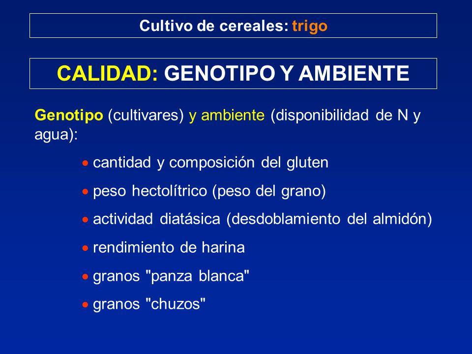 Cultivo de cereales: trigo CALIDAD: GENOTIPO Y AMBIENTE