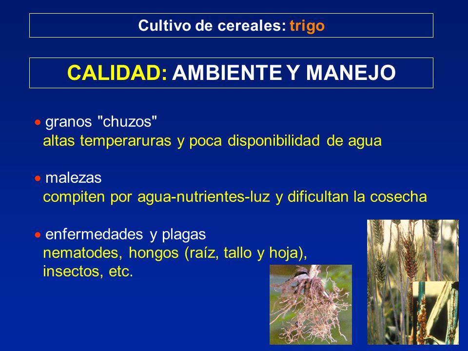 Cultivo de cereales: trigo CALIDAD: AMBIENTE Y MANEJO