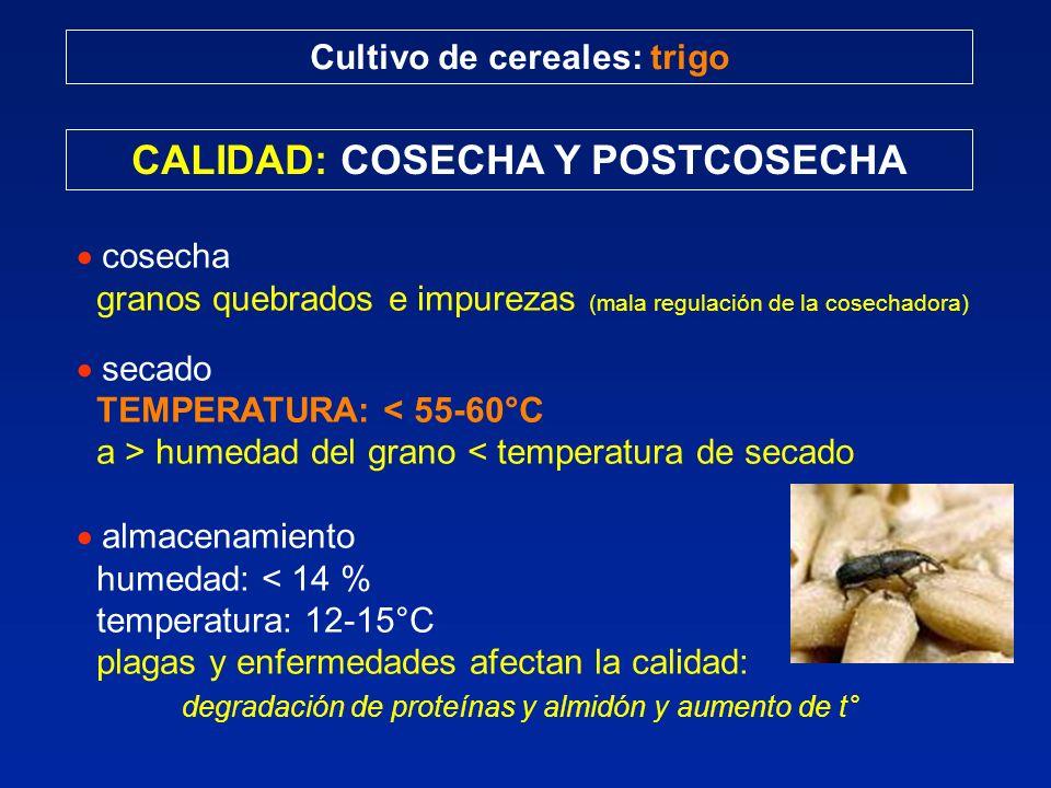 Cultivo de cereales: trigo CALIDAD: COSECHA Y POSTCOSECHA