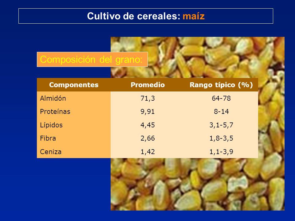 Cultivo de cereales: maíz