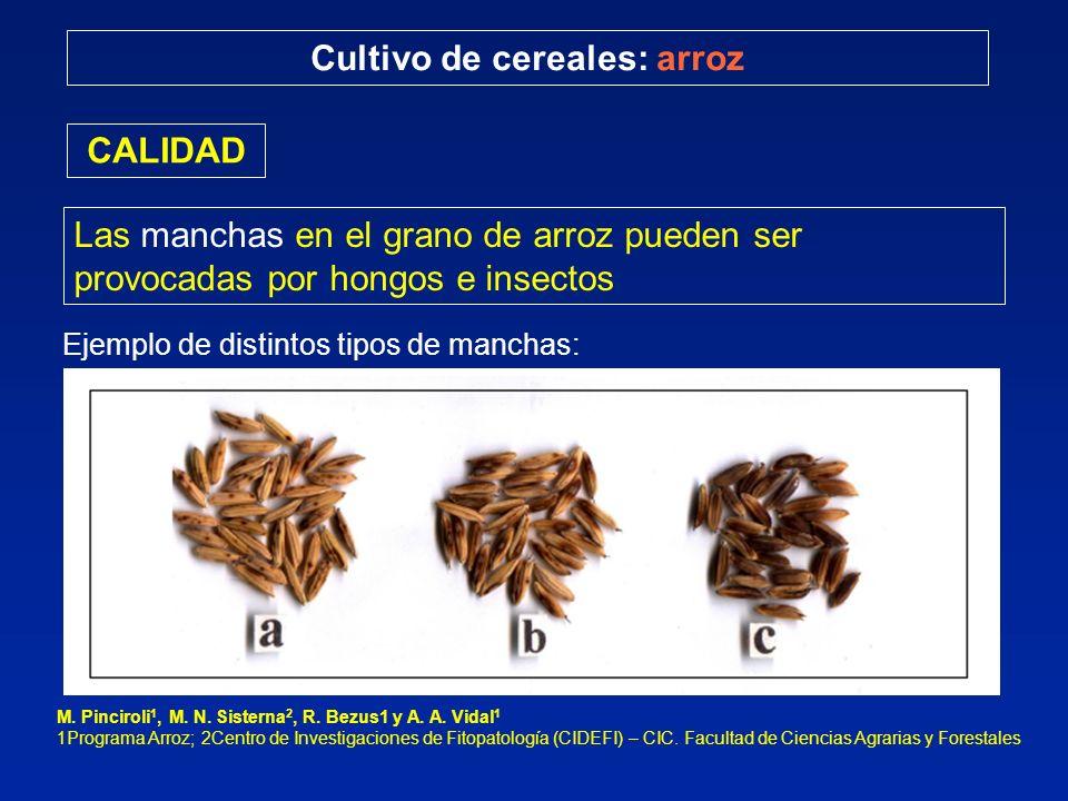 Cultivo de cereales: arroz