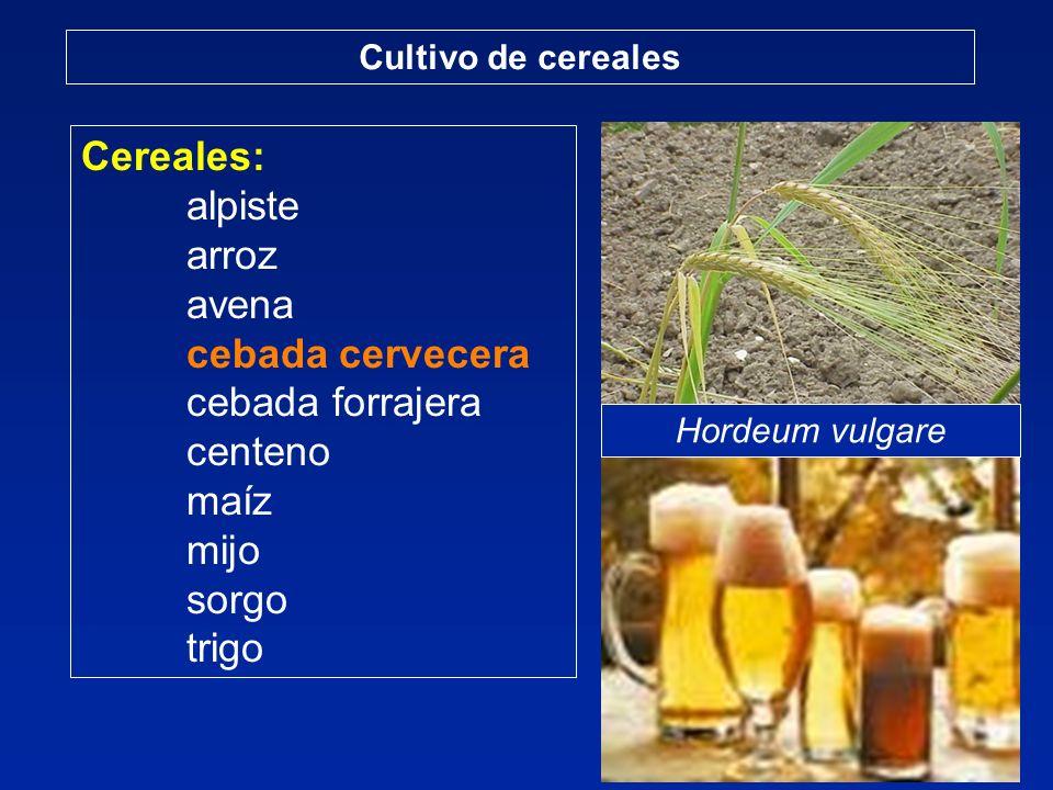 Cereales: alpiste arroz avena cebada cervecera cebada forrajera