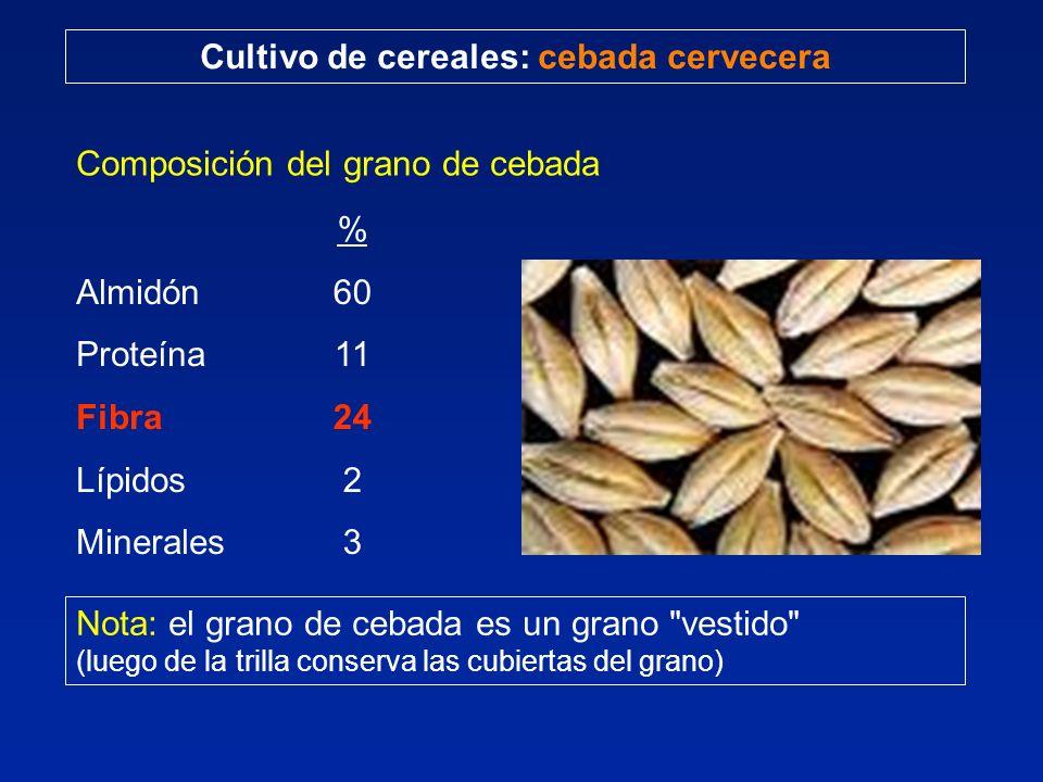 Cultivo de cereales: cebada cervecera