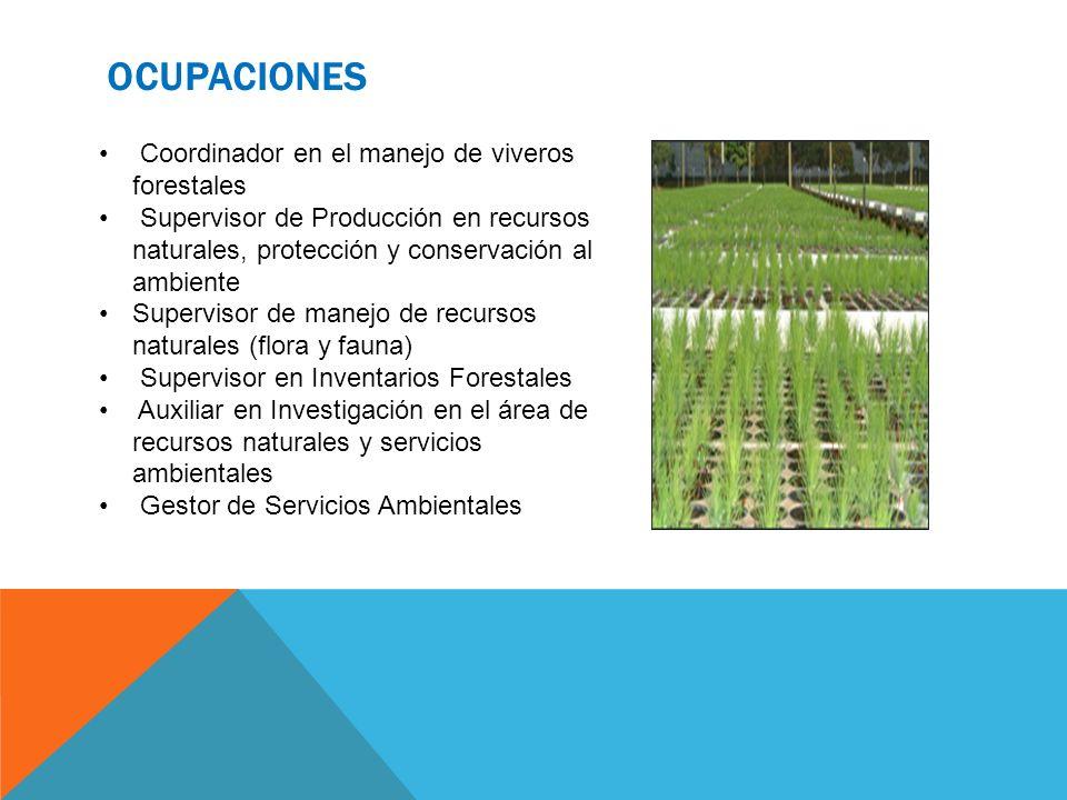OCUPACIONES Coordinador en el manejo de viveros forestales