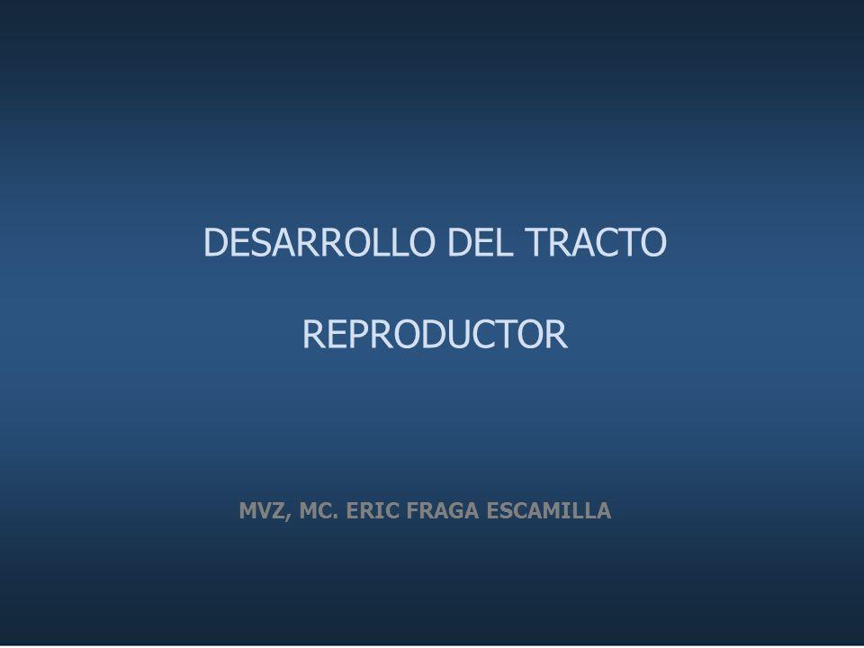 DESARROLLO DEL TRACTO REPRODUCTOR