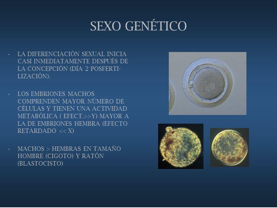 SEXO GENÉTICO LA DIFERENCIACIÓN SEXUAL INICIA CASI INMEDIATAMENTE DESPUÉS DE LA CONCEPCIÓN (DÍA 2 POSFERTI-LIZACIÓN).