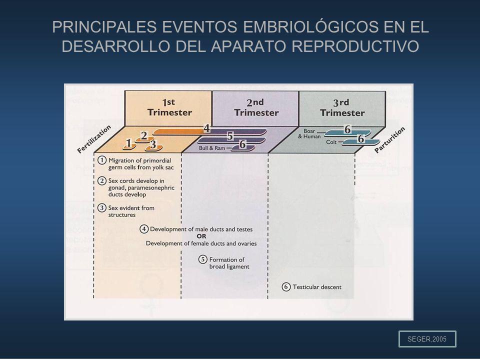 PRINCIPALES EVENTOS EMBRIOLÓGICOS EN EL DESARROLLO DEL APARATO REPRODUCTIVO