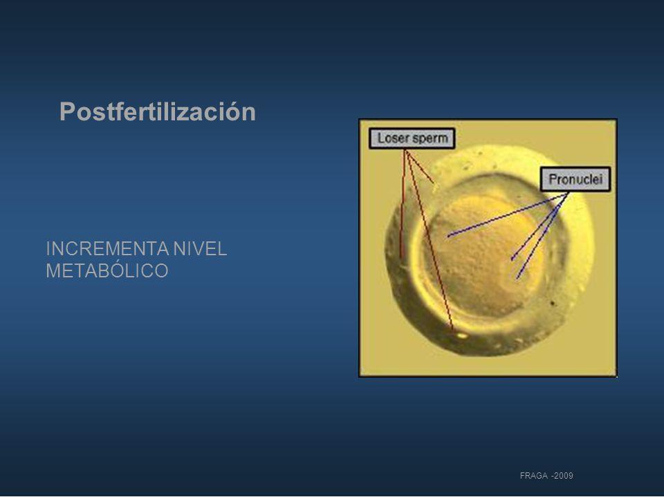 Postfertilización INCREMENTA NIVEL METABÓLICO FRAGA -2009 7