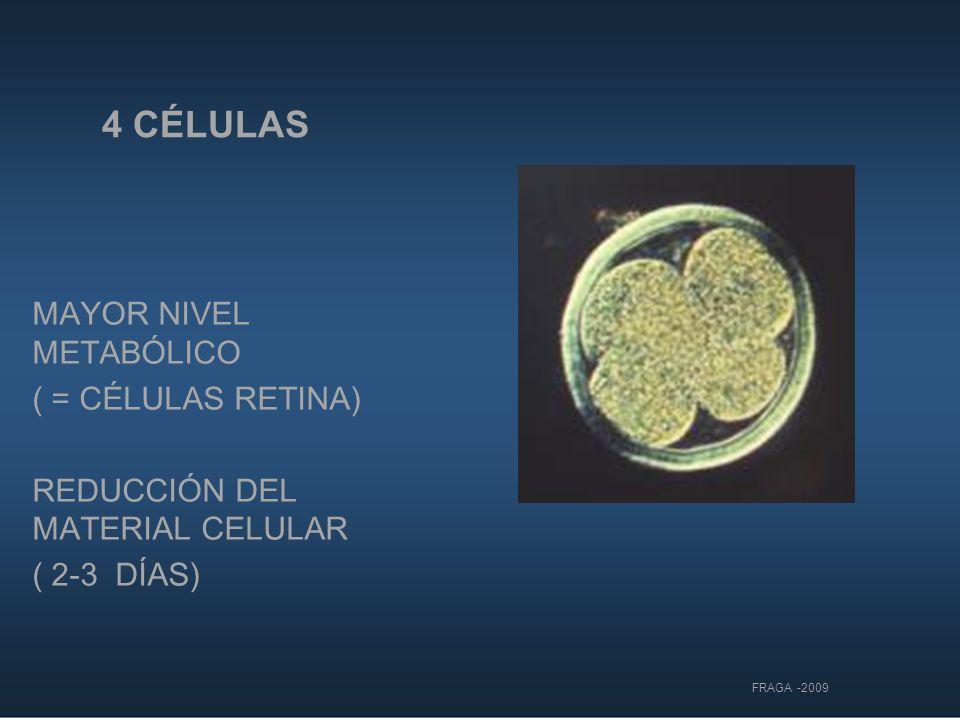 4 CÉLULAS MAYOR NIVEL METABÓLICO ( = CÉLULAS RETINA)