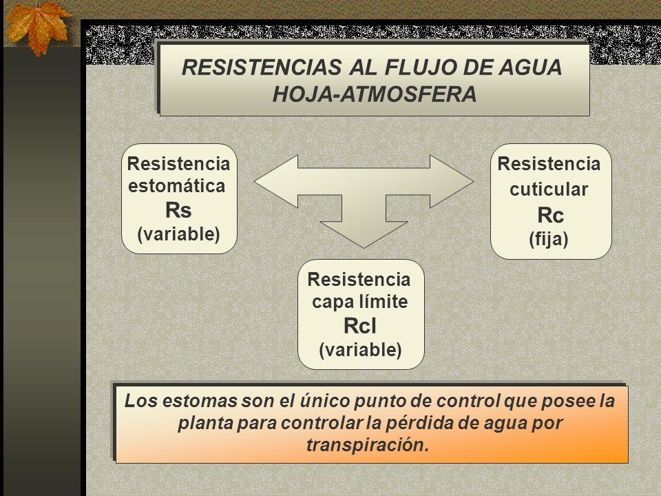 RESISTENCIAS AL FLUJO DE AGUA HOJA-ATMOSFERA Rs Rc Rcl