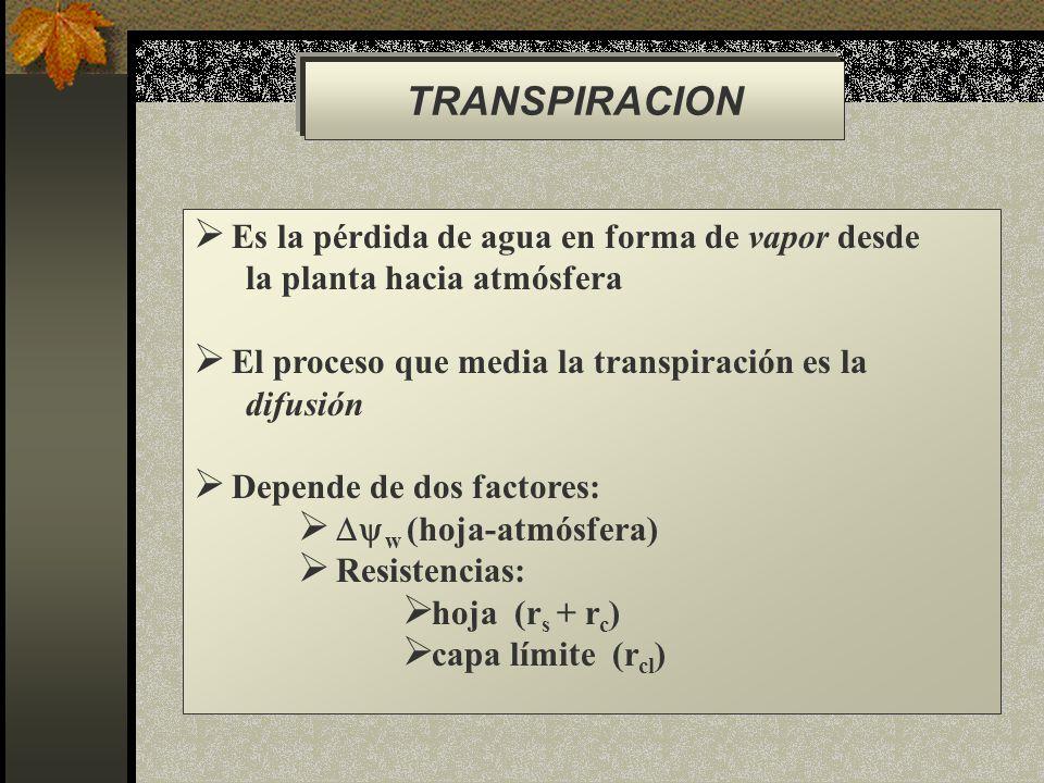 TRANSPIRACION Es la pérdida de agua en forma de vapor desde
