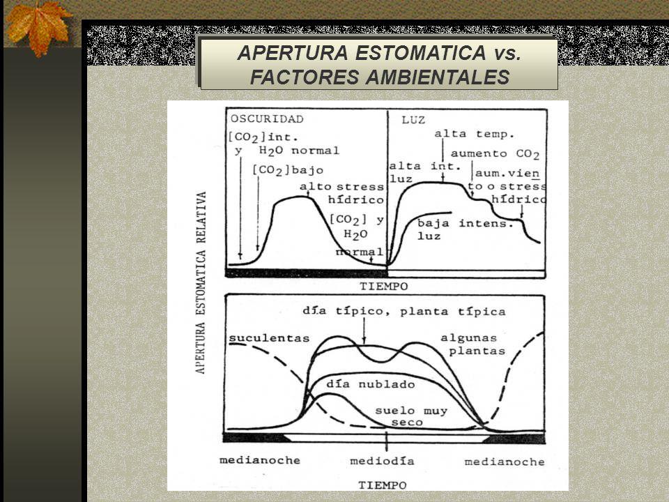 APERTURA ESTOMATICA vs.