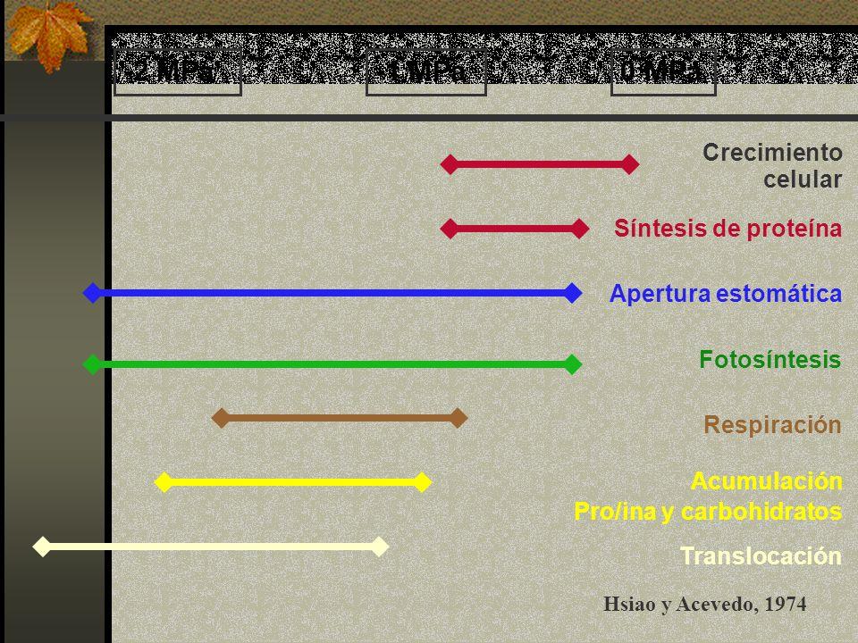 -2 MPa -1 MPa 0 MPa Crecimiento celular Síntesis de proteína