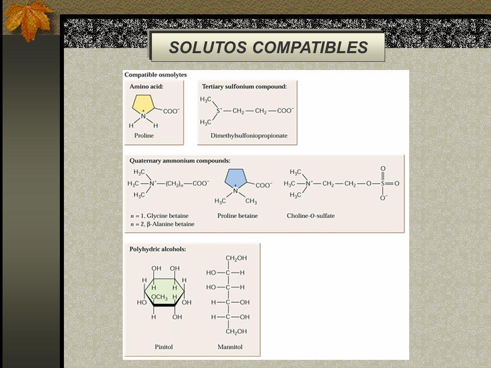 SOLUTOS COMPATIBLES
