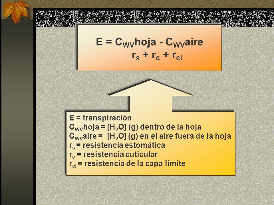 E = CWVhoja - CWVaire rs + rc + rcl
