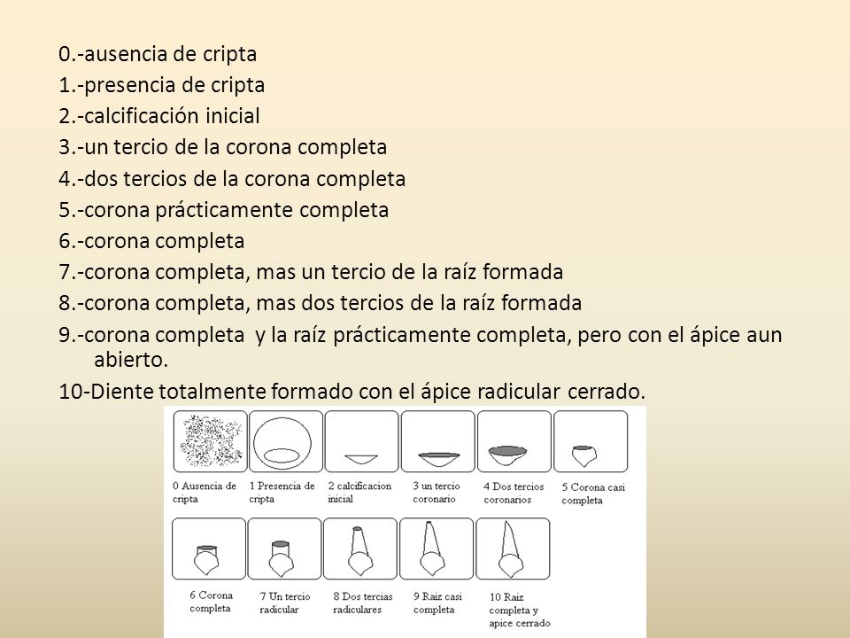 0.-ausencia de cripta 1.-presencia de cripta. 2.-calcificación inicial. 3.-un tercio de la corona completa.