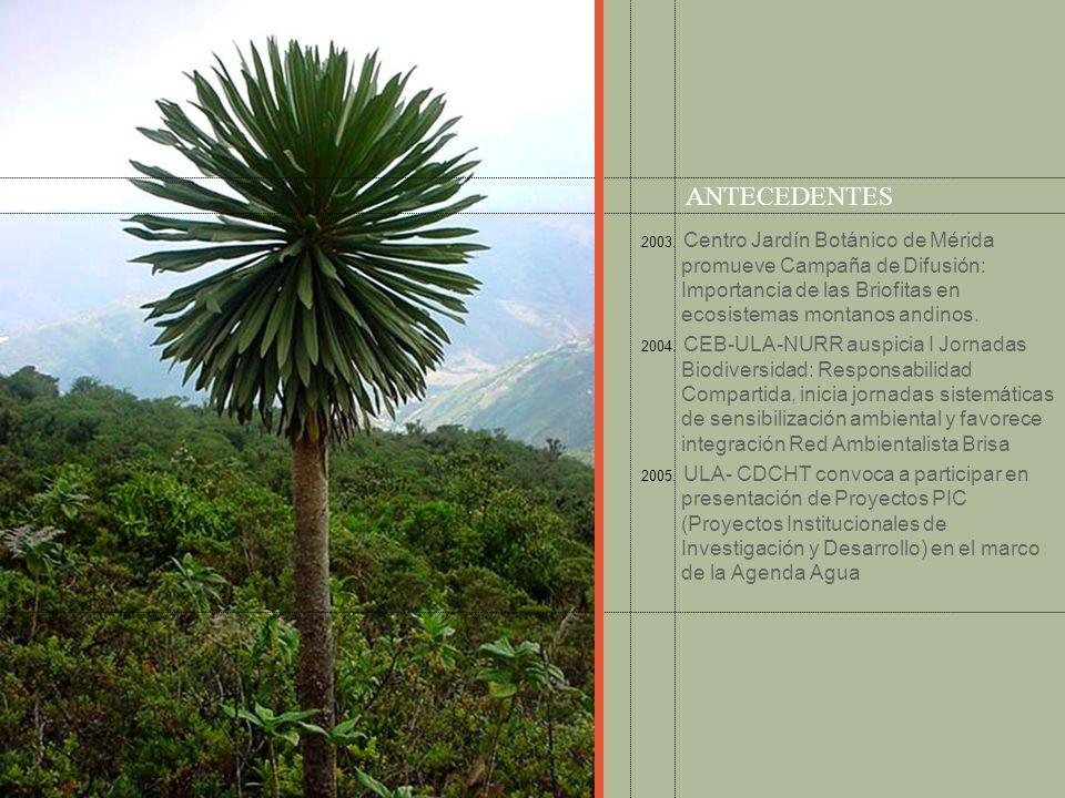 ANTECEDENTES2003. Centro Jardín Botánico de Mérida promueve Campaña de Difusión: Importancia de las Briofitas en ecosistemas montanos andinos.