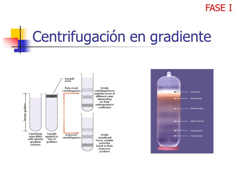Centrifugación en gradiente