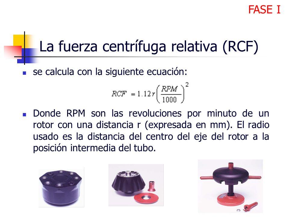La fuerza centrífuga relativa (RCF)