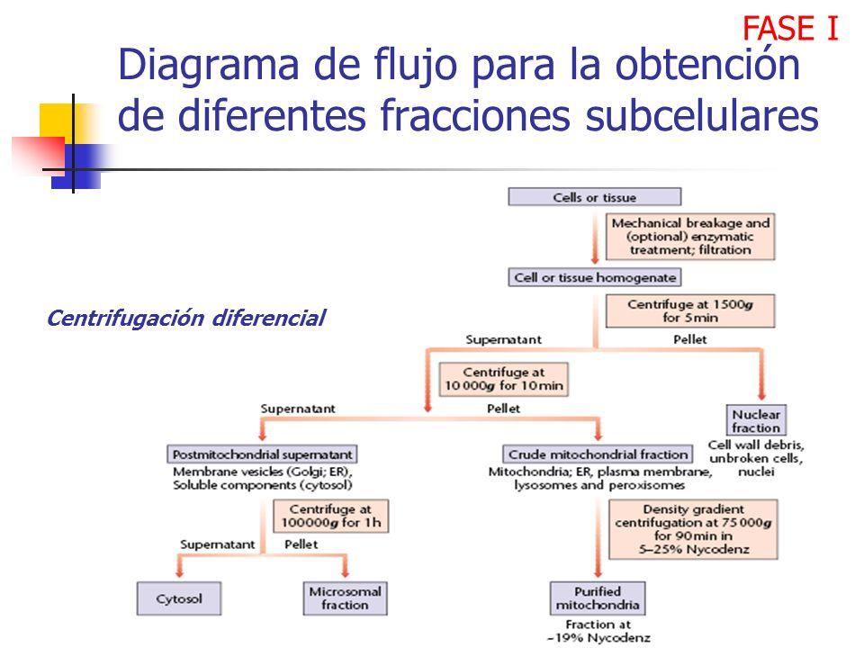 FASE I Diagrama de flujo para la obtención de diferentes fracciones subcelulares.