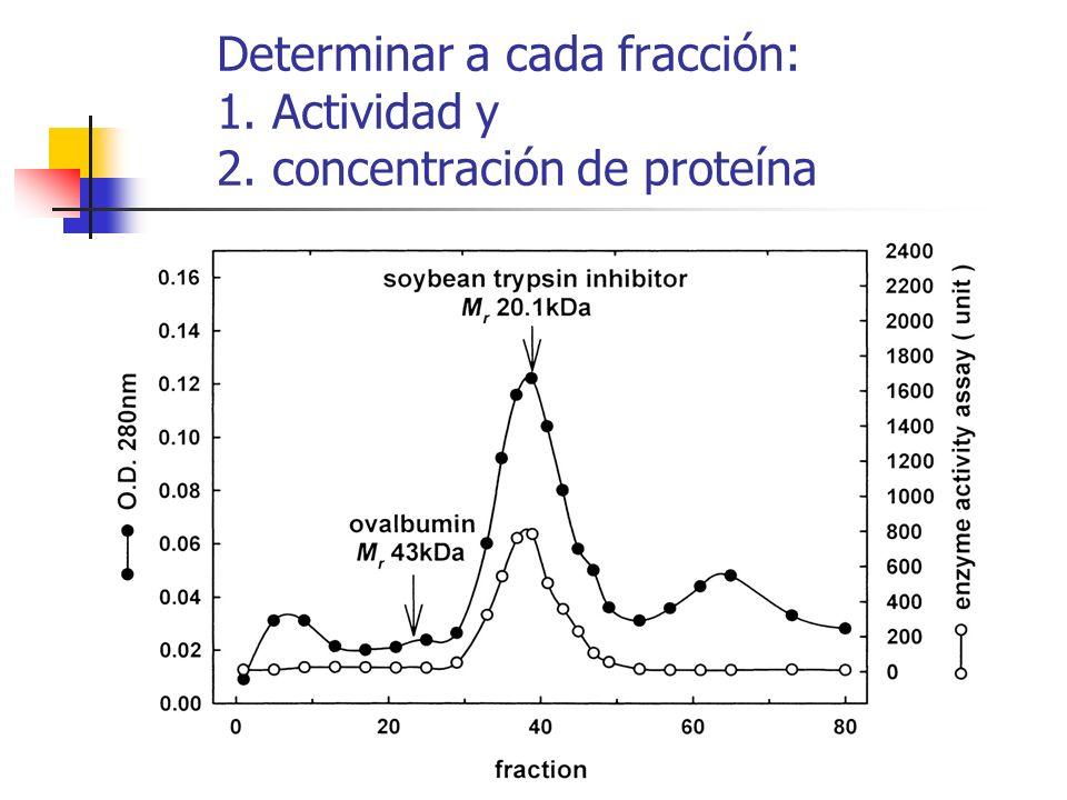 Determinar a cada fracción: 1. Actividad y 2. concentración de proteína