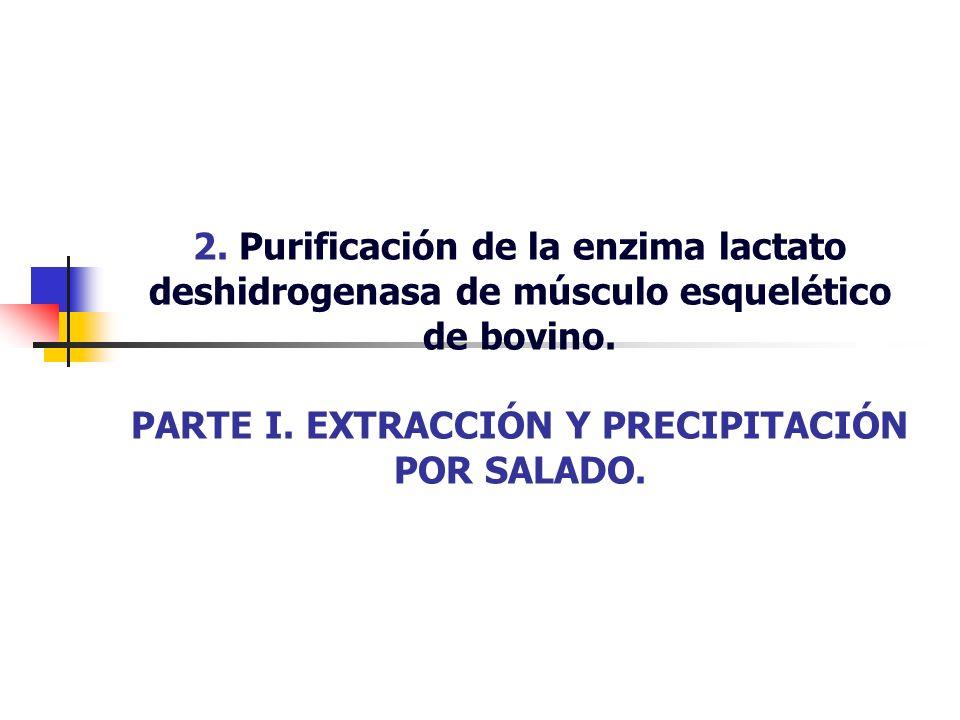 2. Purificación de la enzima lactato deshidrogenasa de músculo esquelético de bovino.