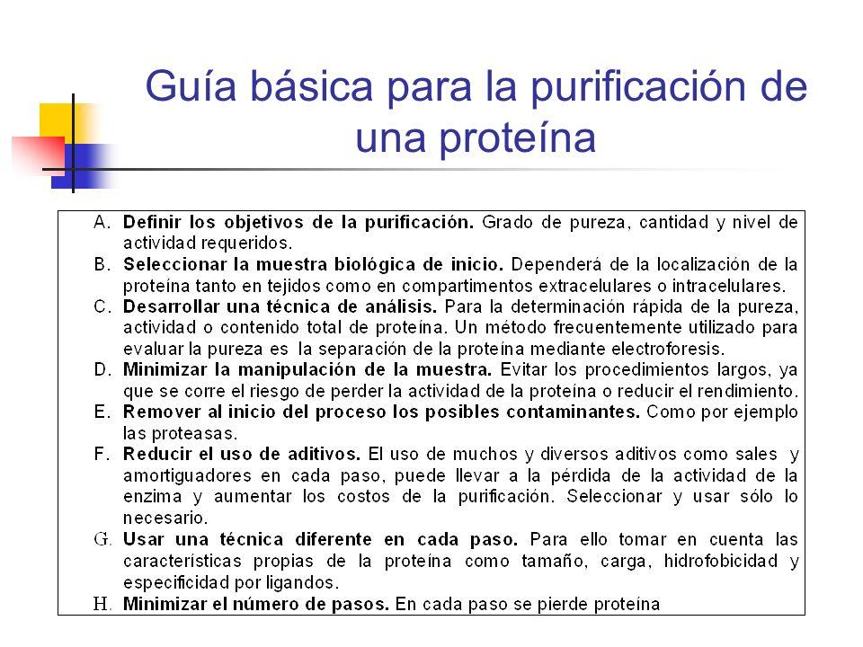 Guía básica para la purificación de una proteína