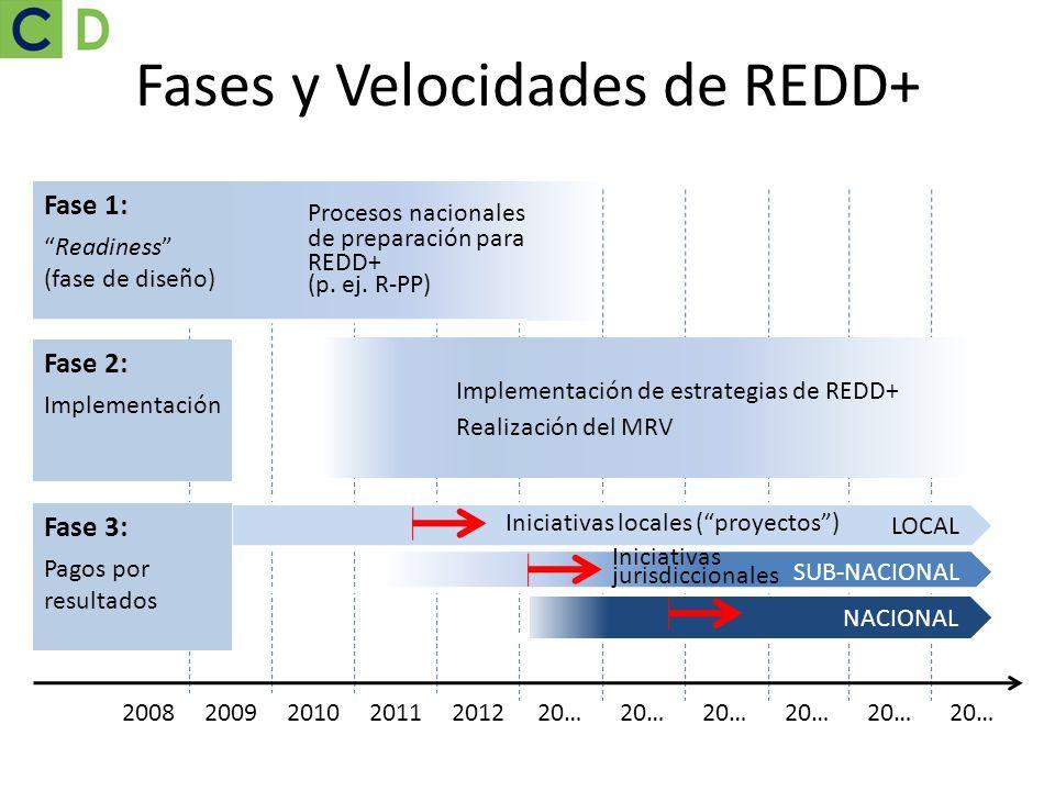 Fases y Velocidades de REDD+