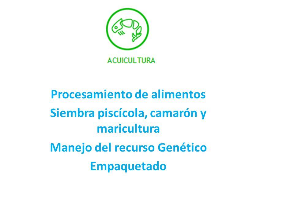 Procesamiento de alimentos Siembra piscícola, camarón y maricultura