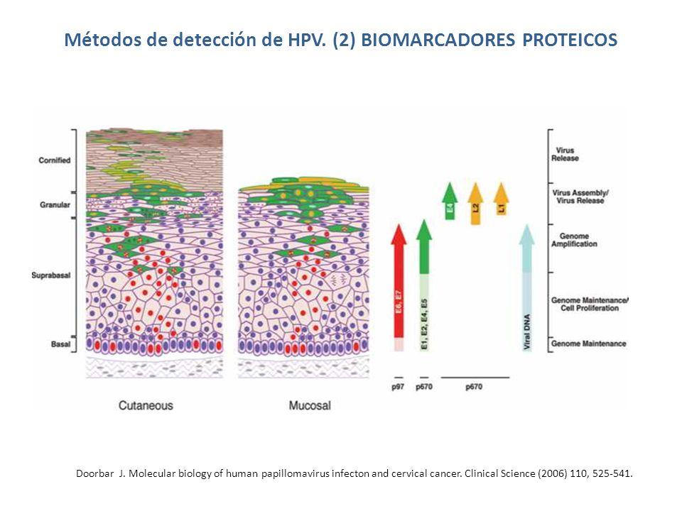 Métodos de detección de HPV. (2) BIOMARCADORES PROTEICOS