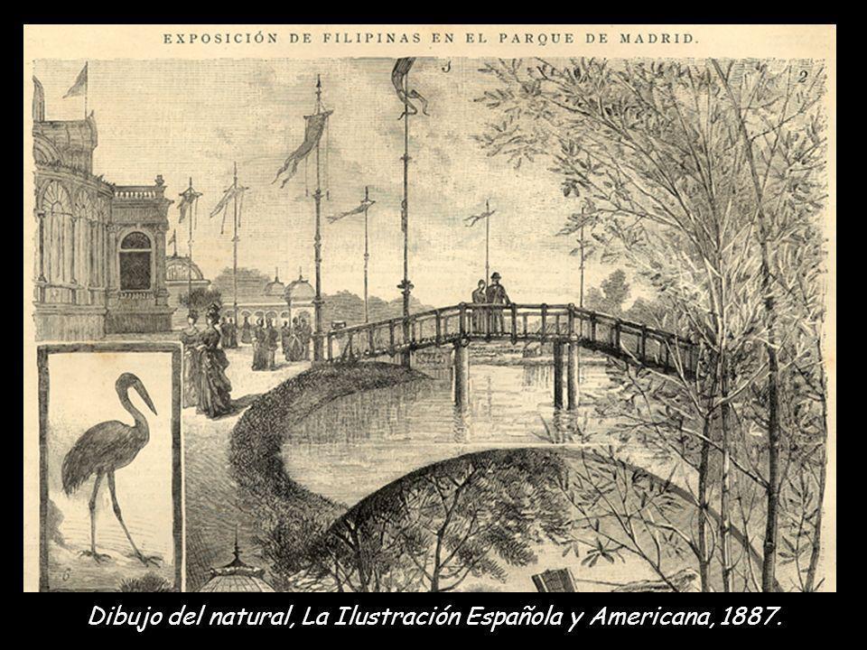 Dibujo del natural, La Ilustración Española y Americana, 1887.