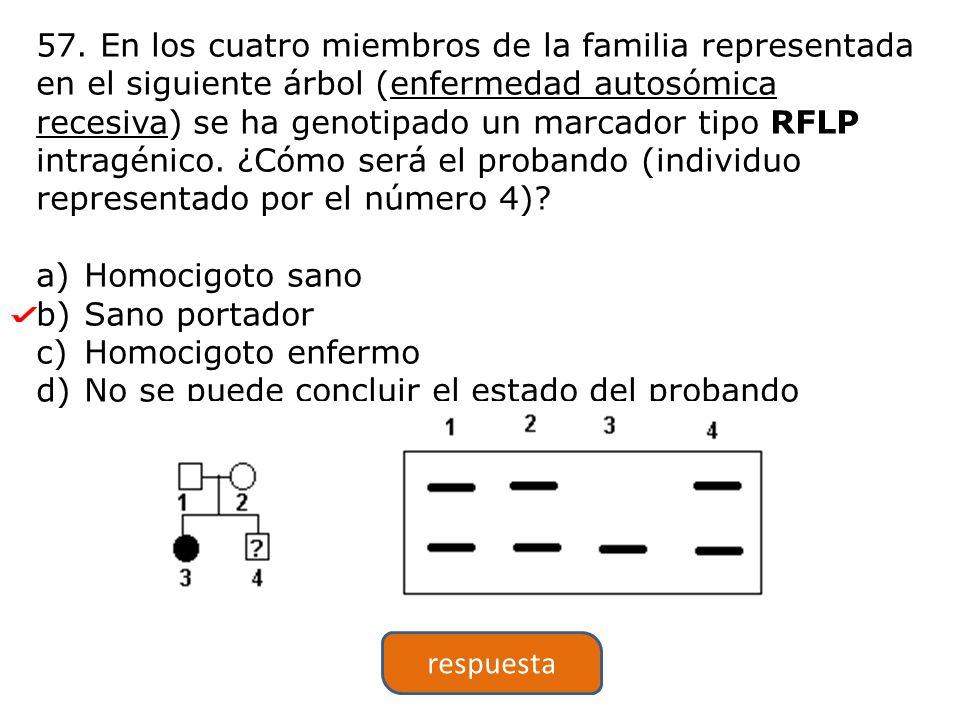 57. En los cuatro miembros de la familia representada en el siguiente árbol (enfermedad autosómica recesiva) se ha genotipado un marcador tipo RFLP intragénico. ¿Cómo será el probando (individuo representado por el número 4)