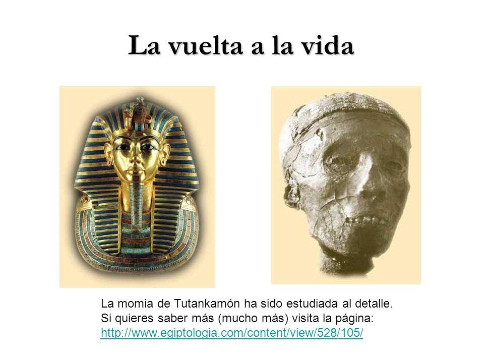 La vuelta a la vida La momia de Tutankamón ha sido estudiada al detalle. Si quieres saber más (mucho más) visita la página: