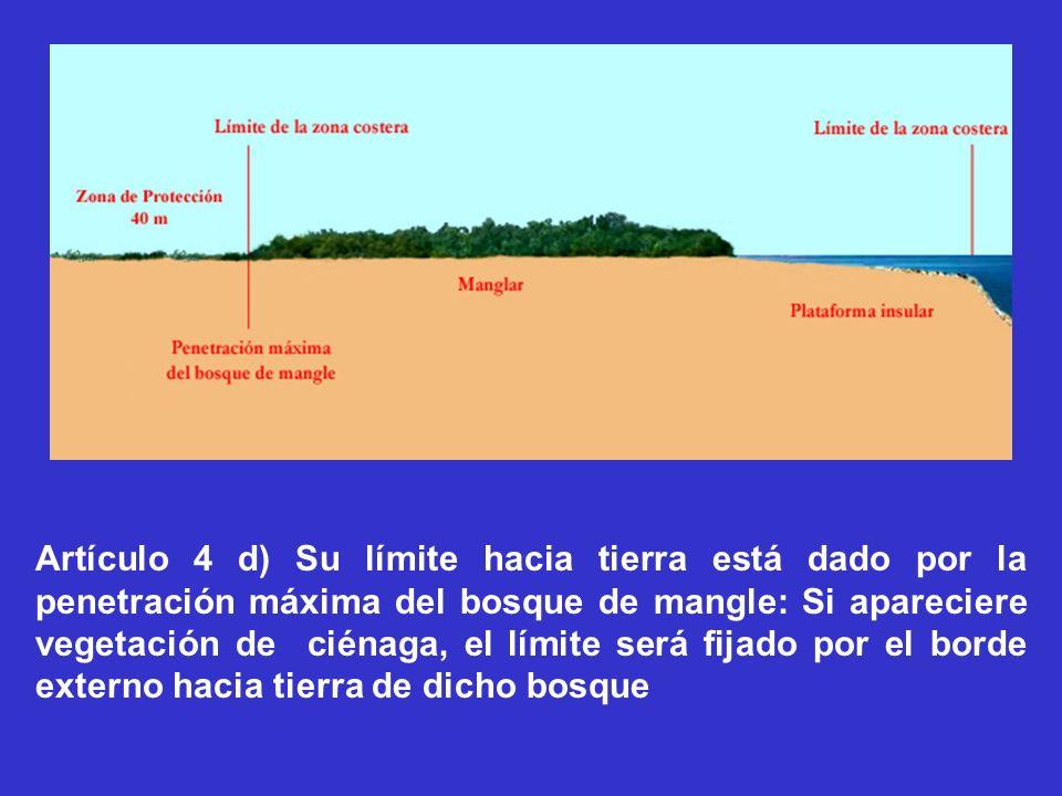 Artículo 4 d) Su límite hacia tierra está dado por la penetración máxima del bosque de mangle: Si apareciere vegetación de ciénaga, el límite será fijado por el borde externo hacia tierra de dicho bosque