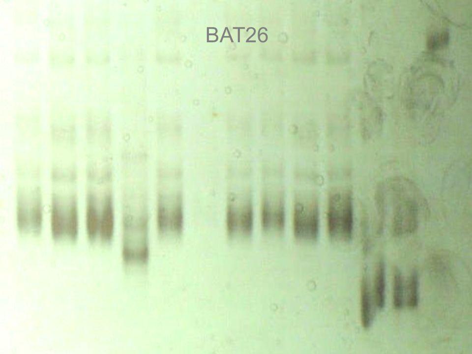 BAT26