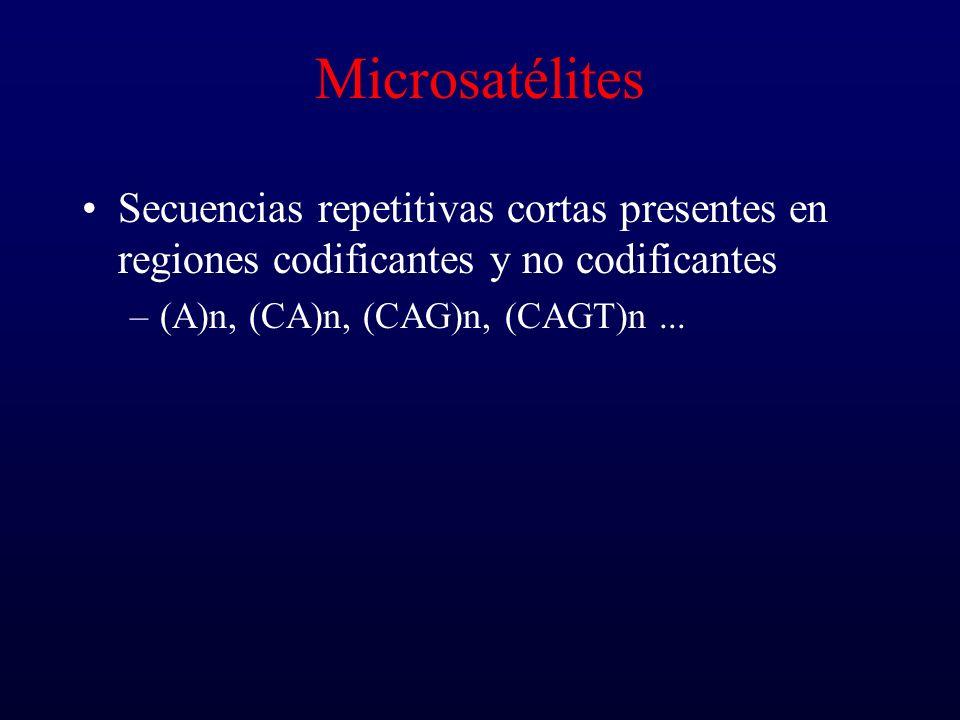 Microsatélites Secuencias repetitivas cortas presentes en regiones codificantes y no codificantes.