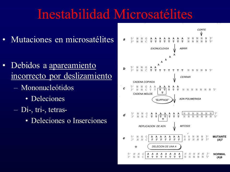 Inestabilidad Microsatélites