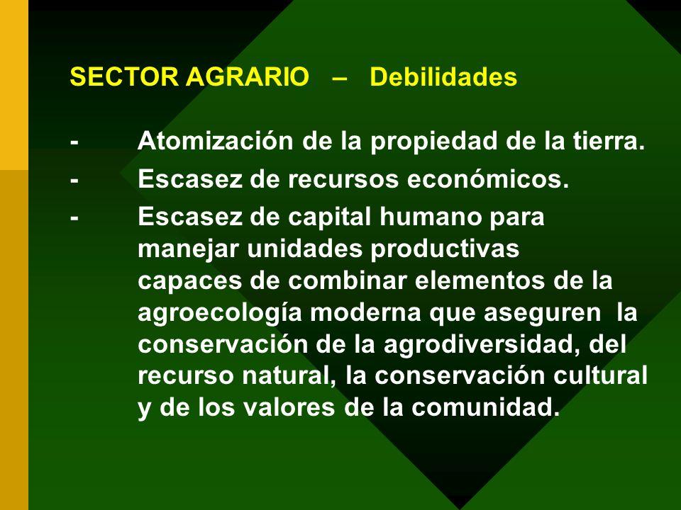 SECTOR AGRARIO – Debilidades -