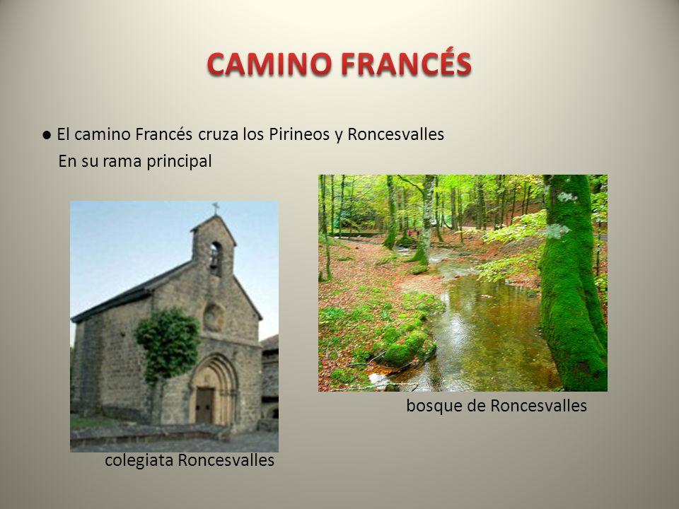 CAMINO FRANCÉS ● El camino Francés cruza los Pirineos y Roncesvalles En su rama principal bosque de Roncesvalles colegiata Roncesvalles