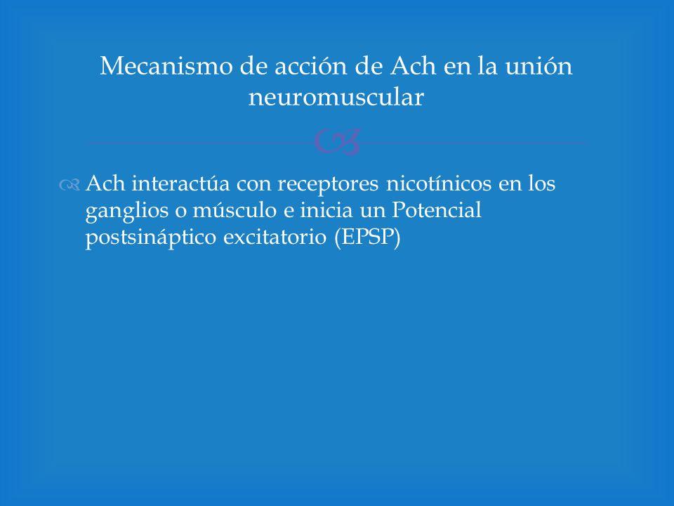 Mecanismo de acción de Ach en la unión neuromuscular