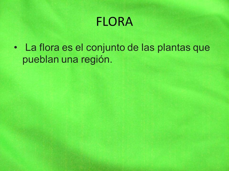 FLORA La flora es el conjunto de las plantas que pueblan una región.