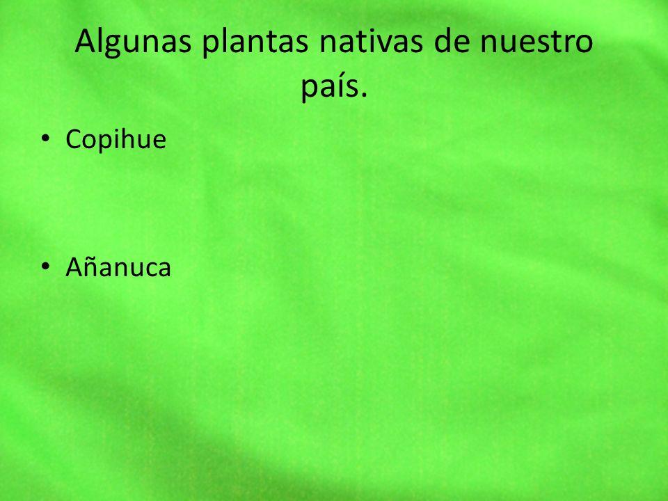 Algunas plantas nativas de nuestro país.
