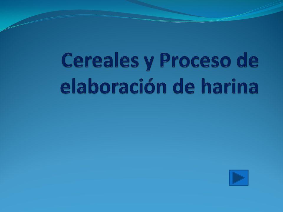 Cereales y Proceso de elaboración de harina