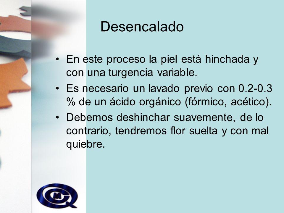 Desencalado En este proceso la piel está hinchada y con una turgencia variable.