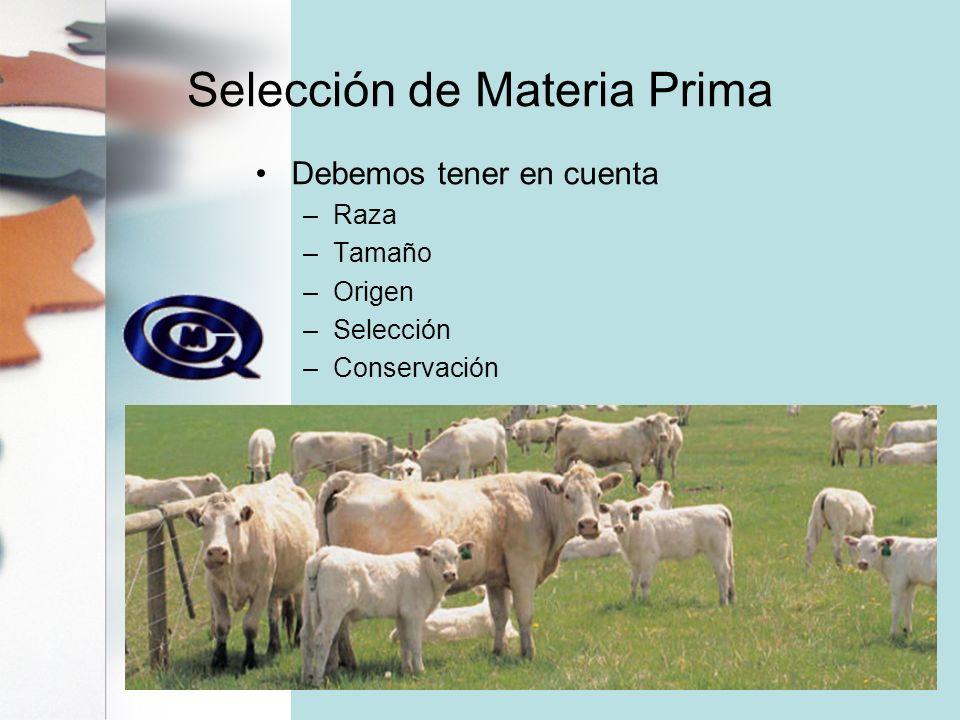 Selección de Materia Prima
