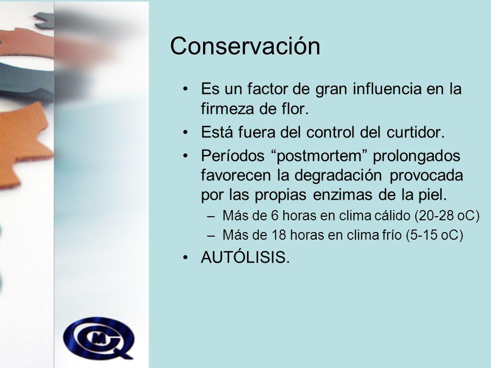 Conservación Es un factor de gran influencia en la firmeza de flor.