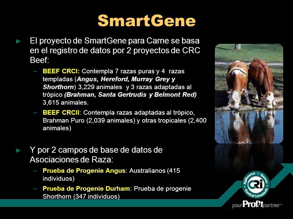 SmartGene El proyecto de SmartGene para Carne se basa en el registro de datos por 2 proyectos de CRC Beef: