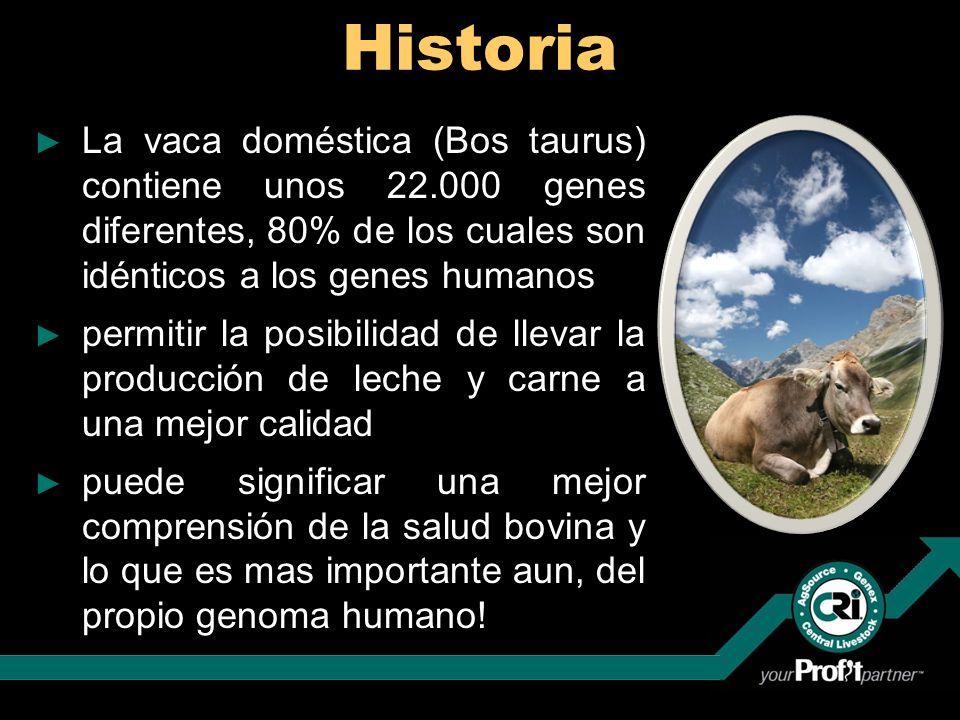 Historia La vaca doméstica (Bos taurus) contiene unos 22.000 genes diferentes, 80% de los cuales son idénticos a los genes humanos.