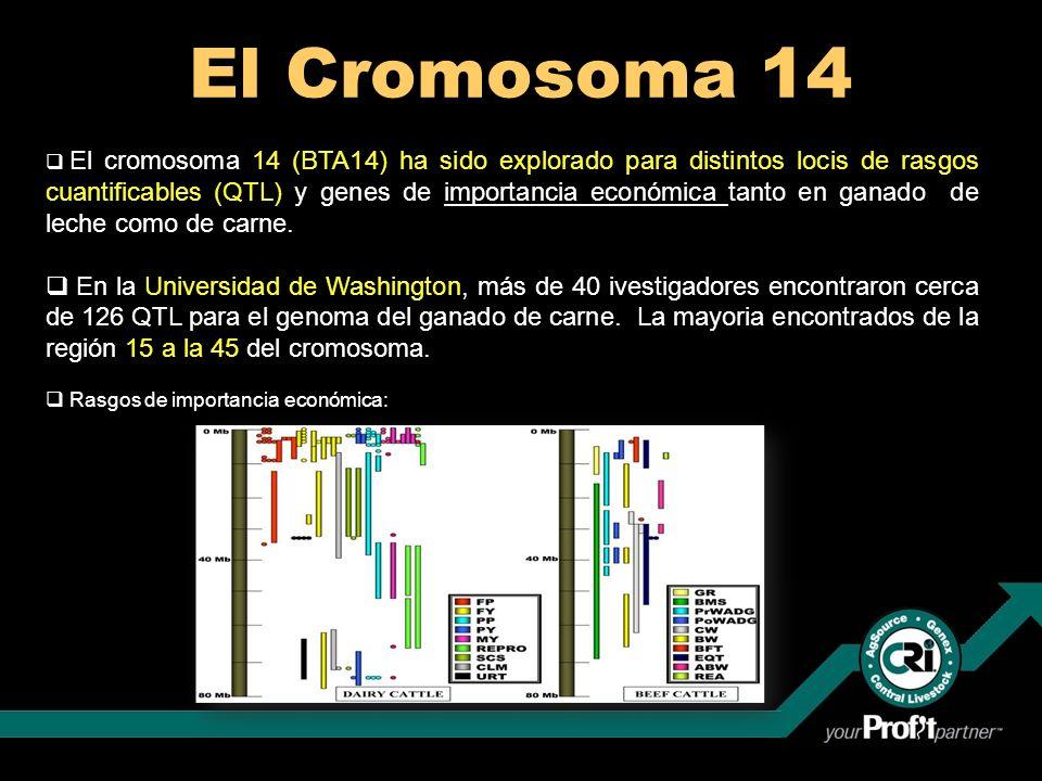 El Cromosoma 14