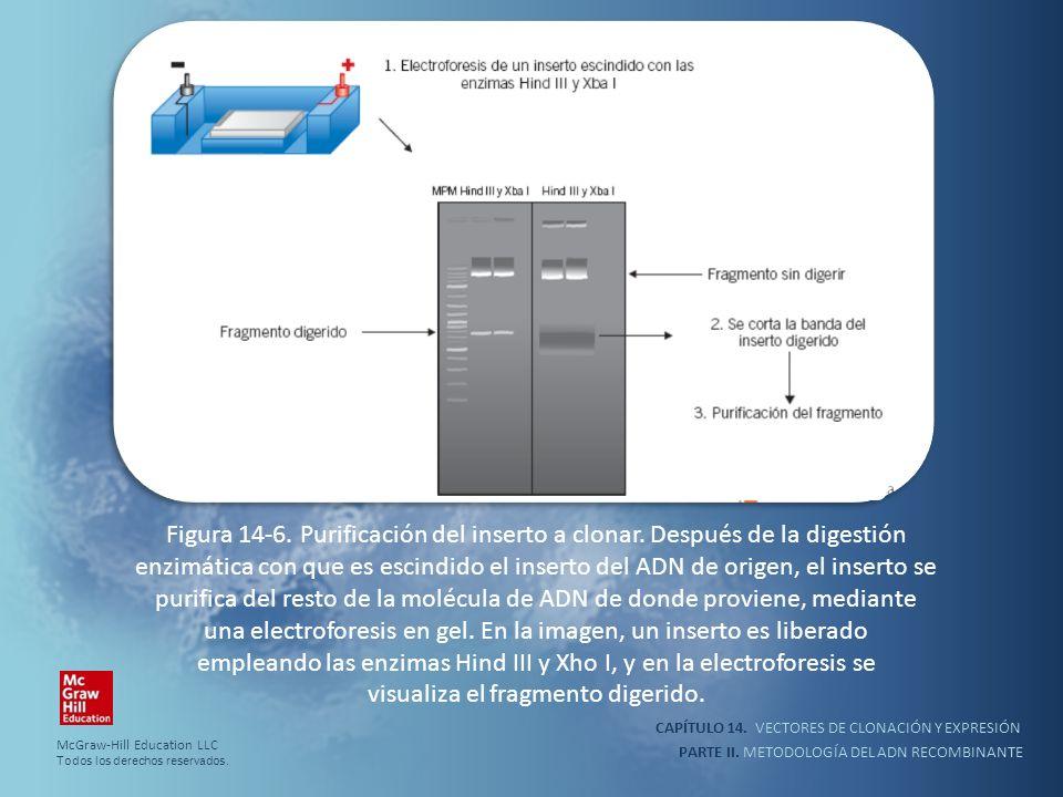 Figura 14-6. Purificación del inserto a clonar